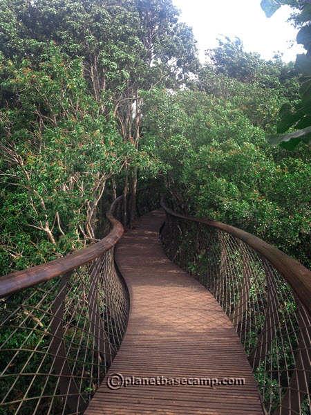 Kirstenbosch Gardens, Cape Town - Canopy Walkway