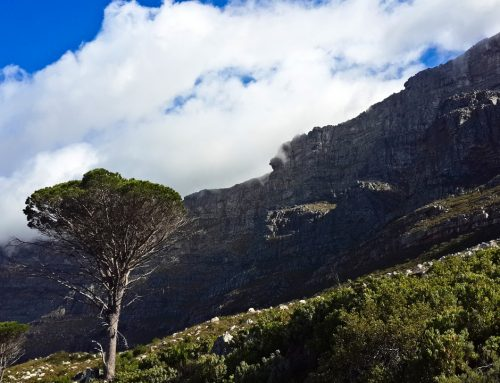 Climbing Table Mountain In Cape Town
