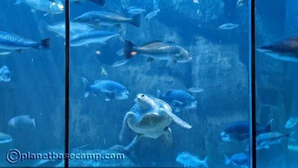 Two Oceans Aquarium - Big Tank with Turtle