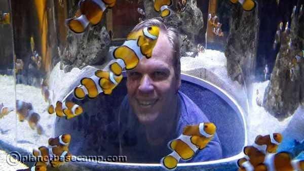 Two Oceans Aquarium - Finding Nemo