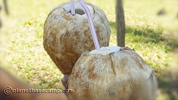 Massinga Beach - Fresh Coconut